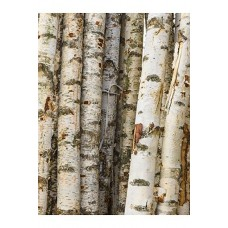 Decowood Birch trunks