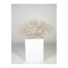 Decowood Coral bush groot